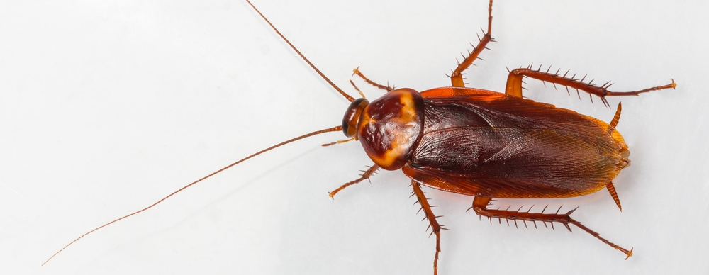 cockroach resized